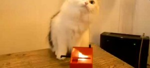 cat-theremin1